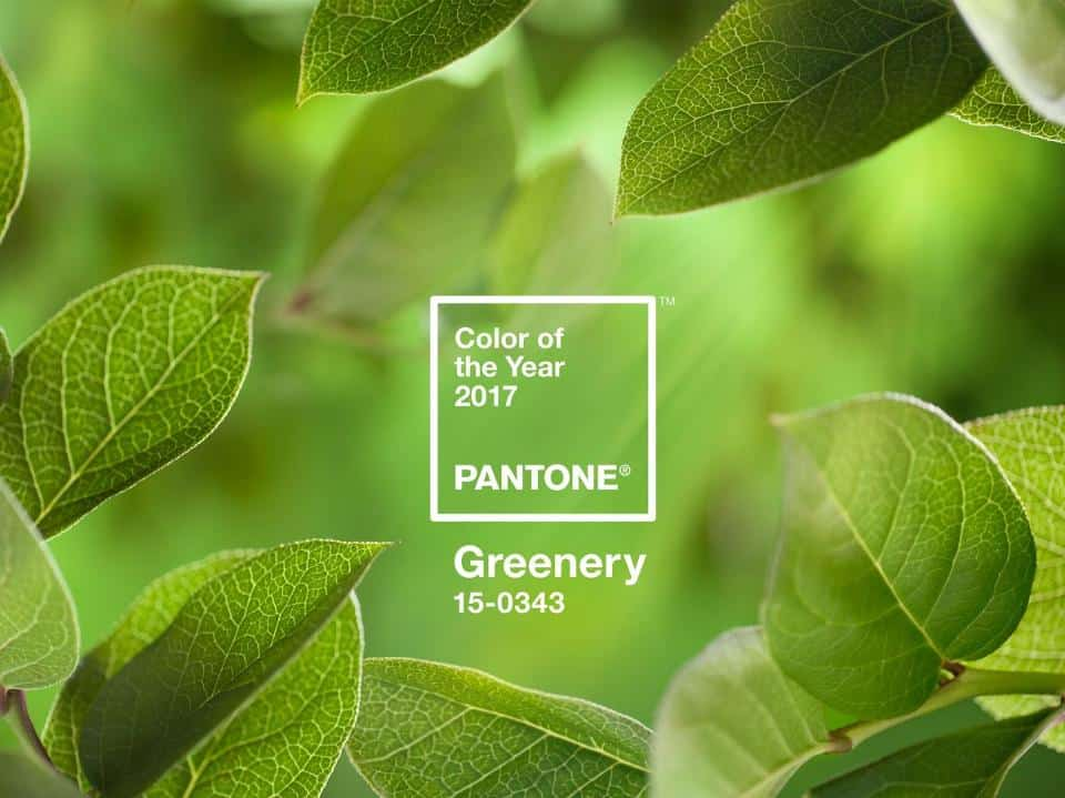 pantone-color-of-the-year-2017-greenery-15-0343-leaves-2732×2048-1200×900